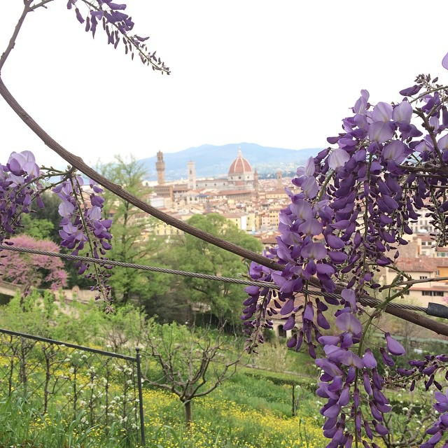 Wisteria and View of Duomo from the Bardini Gardens in Florence