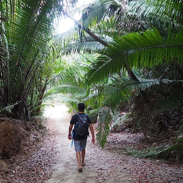Walking through the palms